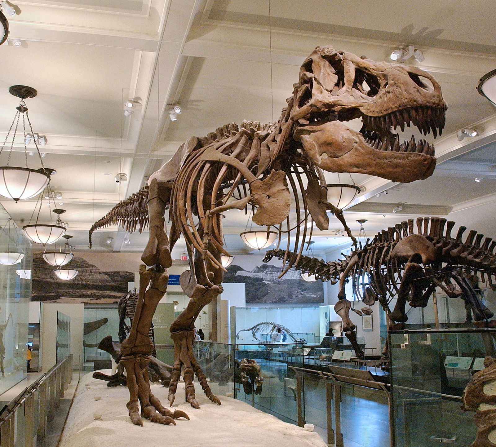 nyc-american-museum-natural-history-t-rex
