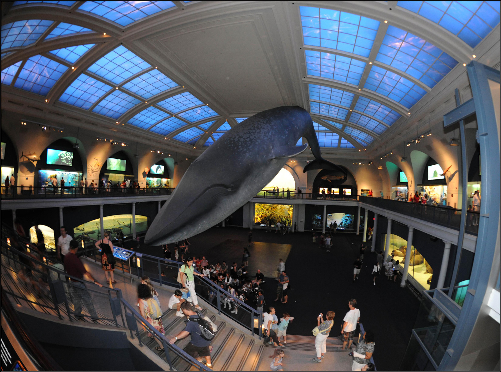 nyc-american-museum-natural-history-whale