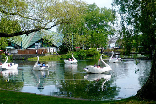 Swans at  Centre Island